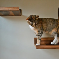 Handcrafted All Black Walnut Hardwood Cat Shelves, Set of 5