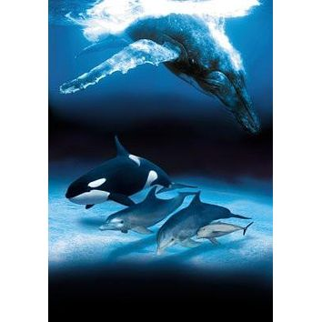 Dolphins And Whales poster Metal Sign Wall Art 8in x 12in