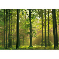 Brewster Home Fashions Ideal Decor Autumn Forest Wall Mural