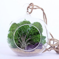 Small Air Plant and Amethyst Crystal Point Terrarium Kit with Green Moss