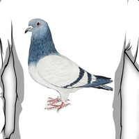 Pigeon T-Shirt Long Sleeve