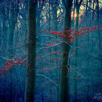 Nature Photography, Blue Forest, Winter, Trees, Surreal Decor, Red Leaves, Dreamscape, Fine Art Photo, Woodland Home Decor, Large Art Print