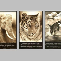 "Endangered Wildlife Trilogy poster series, Elephant, Tiger, Orca, 11""x 17"" Posters"