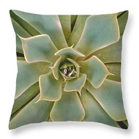 "A Cactus Rosette Throw Pillow 14"" x 14"""
