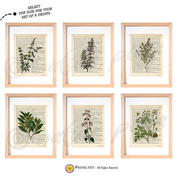 Set of 6 Herbs kitchen wall art-set of 6 herbs dictionary prints-kichen print set-herbs print-Upcycled Dictionary herbs-by NATURA PICTA