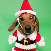 Christmas Santa Dog Costume and Cat Costume Holiday Fun Pet Gift!