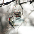 Mason Jar Bird Feeder With Copper Hanger Upcycled Rustic Country