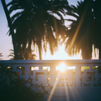Beach art, palm tree photography, sunset art, decor, art, photography, poster print, wall art, hipster art, urban outfitters, sunrise film