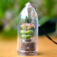 Baby's Necklace Succulent Live Terrarium Phone by WearItMiniPlants