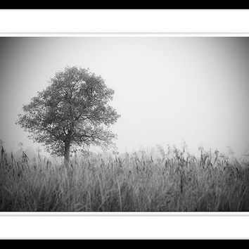 Black and white photography landscape photography modern neutral monochrome fine art print 8x12 home decor fall landscape tree photo print