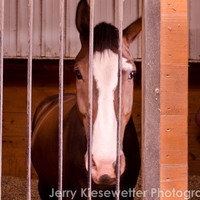 Horse Photography Equestrian Art Western Photo Equine Photo Horse in Stable Brown Earth tone home Decor