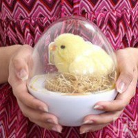 INFMETRY:: Electric Chick - Funny - Toys
