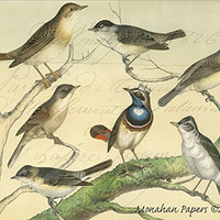French Paper Dining Placemats - Set of 12 (Crowned Bird - Color)