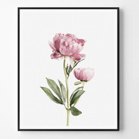 Peony flower, Flower, Plant Print, Neutral Photo, Minimal photo, Plant Wall Art, Photo, Minimalist Print, Scandinavian Printable, Modern