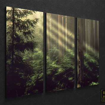 Forets Framed  Nature Photo LARGE Canvas Art Print Ready to Hang - 3 PANELS 084