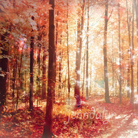 A Soul On Fire - PHOTO, autumn forest photo, autumn trees, red wall art