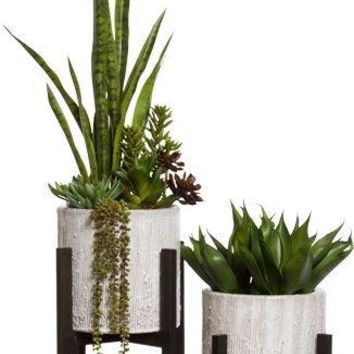 Sansaveria/Succulents In Tall Plant Stand * Item On The Left Only *