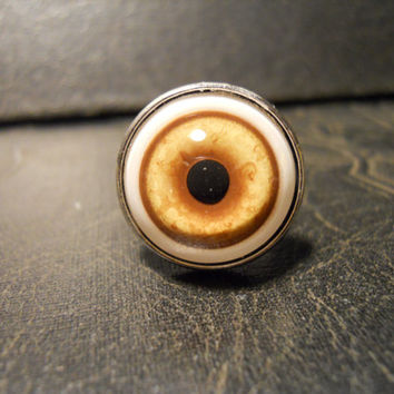 Coyote Eye Taxidermy Glass Eye Ring