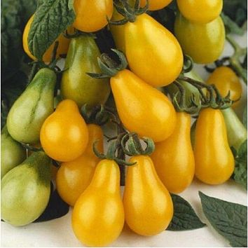 Tomato New Arrival Outdoor Plants Garden Seeds Sementes Bunches Of Bananas 200 Seeds Organic Vegetable
