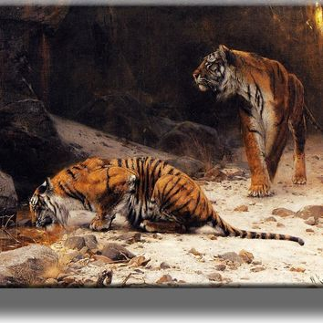 Tigers at Drinking Pool Picture on Acrylic , Wall Art Décor, Ready to Hang!