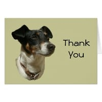 Thank You Card with Jack Russell Dog