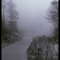 Foggy Path Clingman's Dome by Dan Sproul