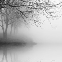 black and white photography, trees, fog, landscape, nature, winter 11 x 14 print