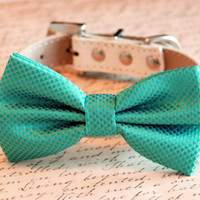 Aqua bow tie attached to leather dog collar, Chic Dog Bow tie, Pet Wedding Accessories, 2014 Wedding Accessories