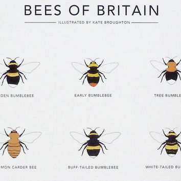 "Bees of Britain print (A4, A3 or 13""x19"")"