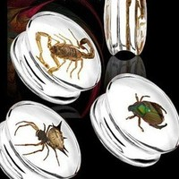 Bug Encased Resin Plugs - Scorpion, Beetle, Spider, 16mm,18mm,20mm,22mm,24mm