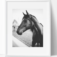 Horse 2 Wall Art Photography, Black and White Modern Art, Prints