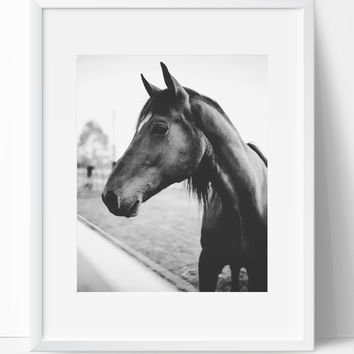 Horse 2 wall art photography black and white modern art prints
