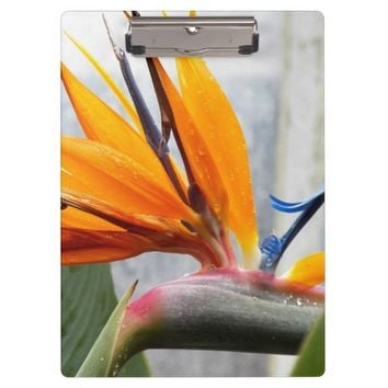 Bird of Paradise Floral Clipboard