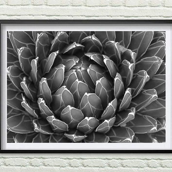 Cactus Print, Black and white Art, Cactus Photo, Print Art, Minimalist, Cactus Wall Art, South Western, Wall Decor *55*
