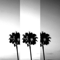 Vintage Palm Tree in Black & White Art Print by Derek Fleener
