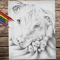 Printable coloring page, Adult Coloring Page, Instant download coloring, Pit Bull, coloring page, adult coloring, coloring book for adults