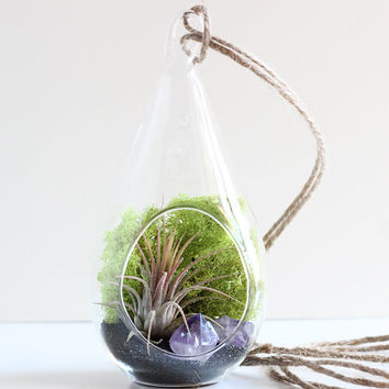 Air Plant and Amethyst Crystal Point Teardrop Terrarium Kit