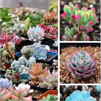 Limited Promotion Outdoor Plants Sementes 100pcs/bag Mix Succulent  Bonsai Plants For Home & Garden Flower Pots Planters
