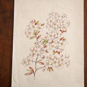 Antique Saturated Prunus Watercolor, Casual Sketch Series