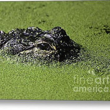 Mississippi  Alligator Stretched Canvas Print / Canvas Art By Dave Hunter
