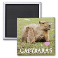 I love capybara's magnet from Zazzle.com