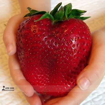 2017 Rarest Heirloom Super Giant Japan Red Strawberry Organic Seeds, Strawberry Seeds, 100 Seed / Pack, Sweet Juicy Fruit