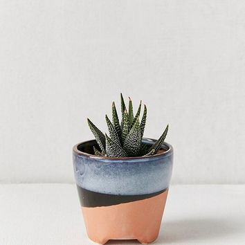 "Adara 3"" Planter 