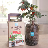 Self Watering Tomato Planter | Grown Your Own Tomatoes