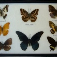 Framed Butterflies III - One Kings Lane - Vintage & Market Finds - Wall Decor