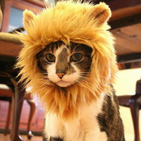 Glorious Lion's Mane Hat For Fierce Cats