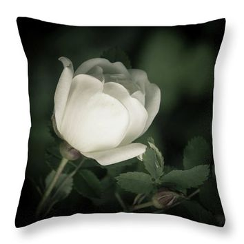 White Flower Of A Dogrose Throw Pillow