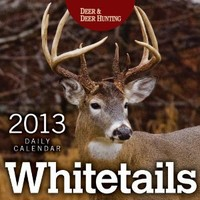 Whitetails 2013 Daily Calendar