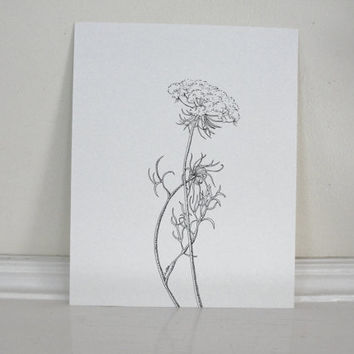 Queen Anne's Lace, Summer Flower,  Original Ink Drawing, Wild Carrot, Summer Wildflower, Black and White Illustration 8 x 10