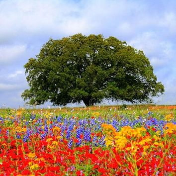 Wildflower Texas Oklahoma Mix Seeds (7g+Seeds)